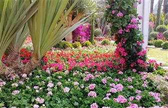 الزراعة: عودة معرض زهور الخريف بعد انقطاع 30 عاما