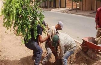 زراعة 3500 شجرة بشبرا الخيمة بالتعاون مع وزارة البيئة ومحافظة القليوبية