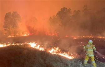 حرائق الغابات تشتعل في سيدني