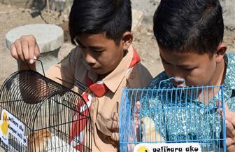 إندونيسيا توزع الكتاكيت على تلاميذ المدارس لصرفهم عن الهواتف الذكية