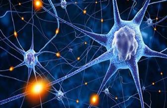 مصر تشارك في المؤتمر الدولى لطب وعلوم الأعصاب بإيطاليا