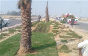 """بدء زراعة وتشجير المدخل الثالث بمدينة """"العاشرمن رمضان"""""""
