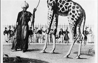 رحلة البحث عن زرافة منذ 120 سنة..  كيف تأسست في مصر حدائق حيوانات الجيزة؟ | صور