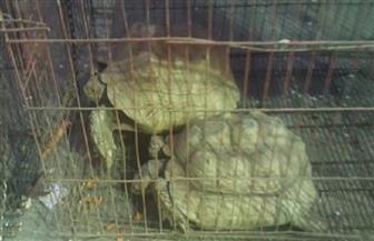 ضبط 17 حيوانا بريا في حملة على محلات بيع الحيوانات الأليفة بالهرم