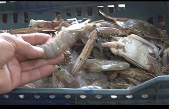 زراعة البحر الأحمر تطرح منتجات غذائية ولحوما وأسماكا ودواجن بأسعار مخفضة | صور