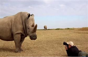 استبدال أظافر البشر بديلاً لقرون وحيد القرن منعا لانقراضه | فيديو