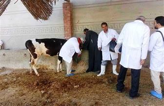 انطلاق حملة تحصين الماشية ضد الحمى القلاعية والوادي المتصدع بالقليوبية