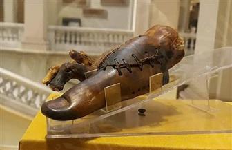 بعد نقل أقدم طرف صناعي لمتحف الحضارة.. كيف عرف الفراعنة إجراء العمليات الجراحية؟ | صور