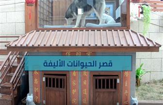 قصر فاخر للحيوانات الأليفة | فيديو