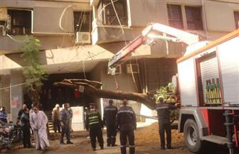 محافظة الجيزة ترفع 65 شجرة سقطت إثر الطقس السيئ | صور