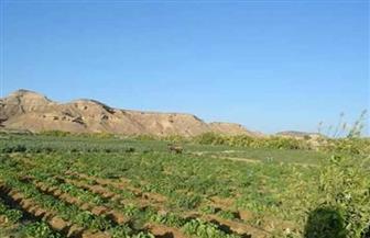 مساحتها 125 فدانا.. محافظ البحر الأحمر يتفقد مزرعة وادي القويح بالقصير   صور