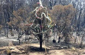 سيدني تعد شجرة عيد الميلاد من حطام حرائق الغابات