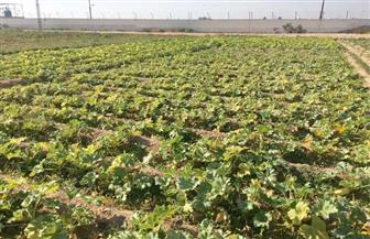 إعداد أكثر من 200 دراسة.. وتحديث التنمية الزراعية 2030.. حصاد معهد بحوث الاقتصاد الزراعي