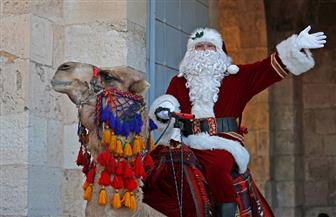 بابا نويل يمتطي جملا ويوزع أشجار عيد الميلاد في القدس | صور