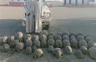 «البيئة»: إحباط تهريب 40 سلحفاة عند الحدود المصرية - السودانية
