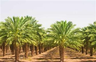 آبار ووحدات سكنية وأشجار نخيل.. تعرف على حصاد 2019 في الوادي الجديد