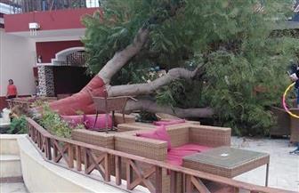 مصرع موظف سقطت عليه شجرة في ناد بالتجمع.. والنيابة تستمع لشهادة العاملين