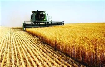 """بعد زيادة مساحة زراعته.. محصول """"القمح"""" في تزايد.. وخبراء: سيتجاوز 9 ملايين طن هذا الموسم"""