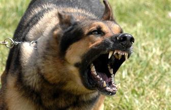 قبل أن يخرج عن السيطرة.. احترس من أخطر مرض نفسى يصيب الكلاب