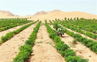 """""""حقن التربة"""".. مشروع اقتصادي يعالج سلبيات الأراضي الصحراوية"""