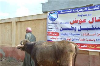الكشف على 50 رأس ماشية فى قافلة بيطرية لمستقبل وطن بدمياط | صور