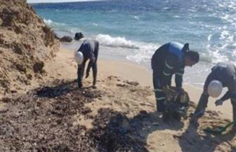 البيئة تواصل القضاء على بقع تلوث زيتي بشاطئ محمية رأس محمد