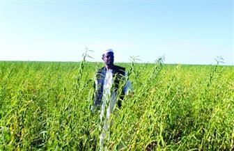 وزير التعليم العالي السوادني: 200 مليون فدان زراعة بالسوادن بحاجة إلى خبرات مصر