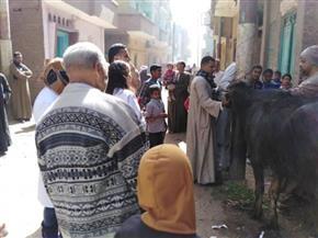 محافظ القليوبية: تحصين 110 آلاف رأس ماشية ضد الحمى القلاعية