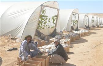 محافظ أسيوط: طرح منتجات الصوب الزراعية من خلال سيارات متنقلة للمواطنين بأسعار مخفضة |صور