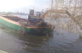 إزالة 12 حالة تعد على النيل في مركز  بسيون بالغربية | صور