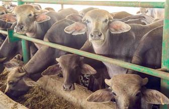 معهد التناسليات ينفذ خطة لرفع كفاءة 5 مزارع للإنتاج الحيواني بأسيوط