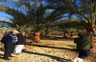 """محافظ مطروح : 380 ألف جنيه لإنتاج طفيل """"الترايكوجراما"""" لمكافحة سوس النخيل"""