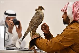 """مهرجان الملك عبدالعزيز للصقور يدخل موسوعة """"جينيس"""" للأرقام القياسية"""