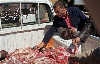 ضبط 300 كجم لحوم فاسدة في حملة بسوهاج | صور