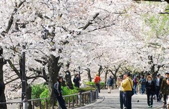 """تعرف على """"اليوم الأبيض"""" في اليابان.. وماذا يفعل فيه الرجال؟"""