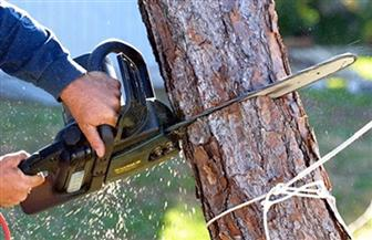 قطع الأشجار ازداد بنسبة 93% في الأمازون البرازيلية