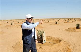 الرئيس السيسي يشيد بالجهود المبذولة في تنفيذ مشروعات مزرعة توشكى