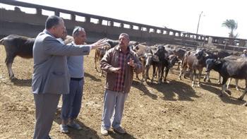 محافظ أسيوط: خطة شاملة لتطوير مزارع الثروة الحيوانية |صور
