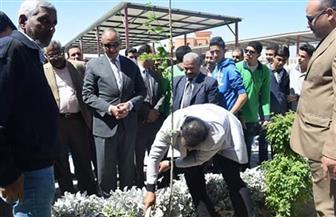 بدء زراعة أشجار التوت بمدارس الغردقة ضمن مبادرة الرئيس | صور
