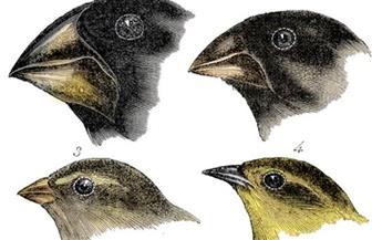 كيف سبق الجاحظ داروين فى نظرية التطور بألف عام؟