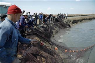 لجنة الصناعة بمجلس النواب تتفقد المزارع السمكية ببورسعيد | صور