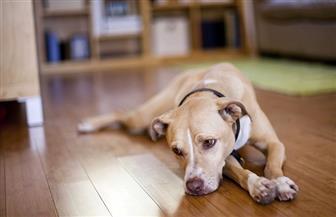 """تشبه نظرة إنسان حزين.. دراسة تفسر سر نظرة الكلاب """"التي لا تقاوم"""""""