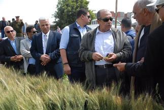 أبو ستيت: لا خطورة من إصابات الصدأ الأصفر على إنتاجية محصول القمح