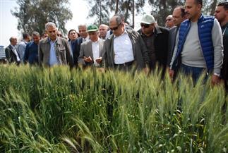 وزير الزراعة: إنتاجنا من القمح يتخطى ٩ ملايين طن لأول مرة | صور