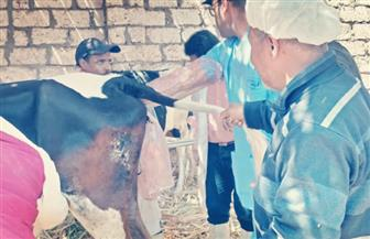 """""""الزراعة"""" تنظم قوافل بيطرية مجانية في محافظة الأقصر  صور"""
