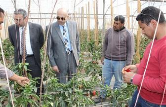 نائب رئيس جامعة طنطا يتفقد أقسام المنتجات والصوب بكلية الزراعة   صور