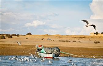 الزراعة: حزام آمن حول بحيرة قارون لتصفية مياهها وعدم نفوق الأسماك