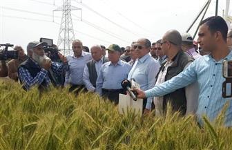 وزير الزراعة يتفقد حقول القمح بكفرالشيخ ويوافق على زيادة مساحة زراعة الأرز لـ 277 ألف فدان