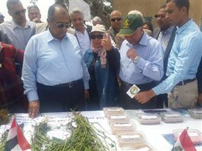 أبو ستيت: زراعة 250 ألف فدان قطن هذا العام| صور