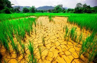 التغيرات المناخية تهدد الزراعة.. الحكومة تتصدى برؤية 2030.. وخبراء يحذرون من الجفاف وتراجع الإنتاجية